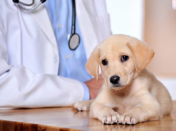 Baltimore Pet Clinic Insurance